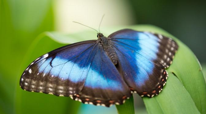 Cuando las mariposas se van